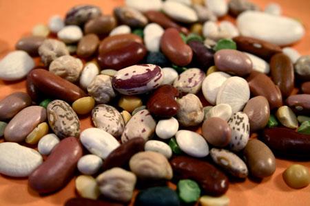 gesund-beans-fiber