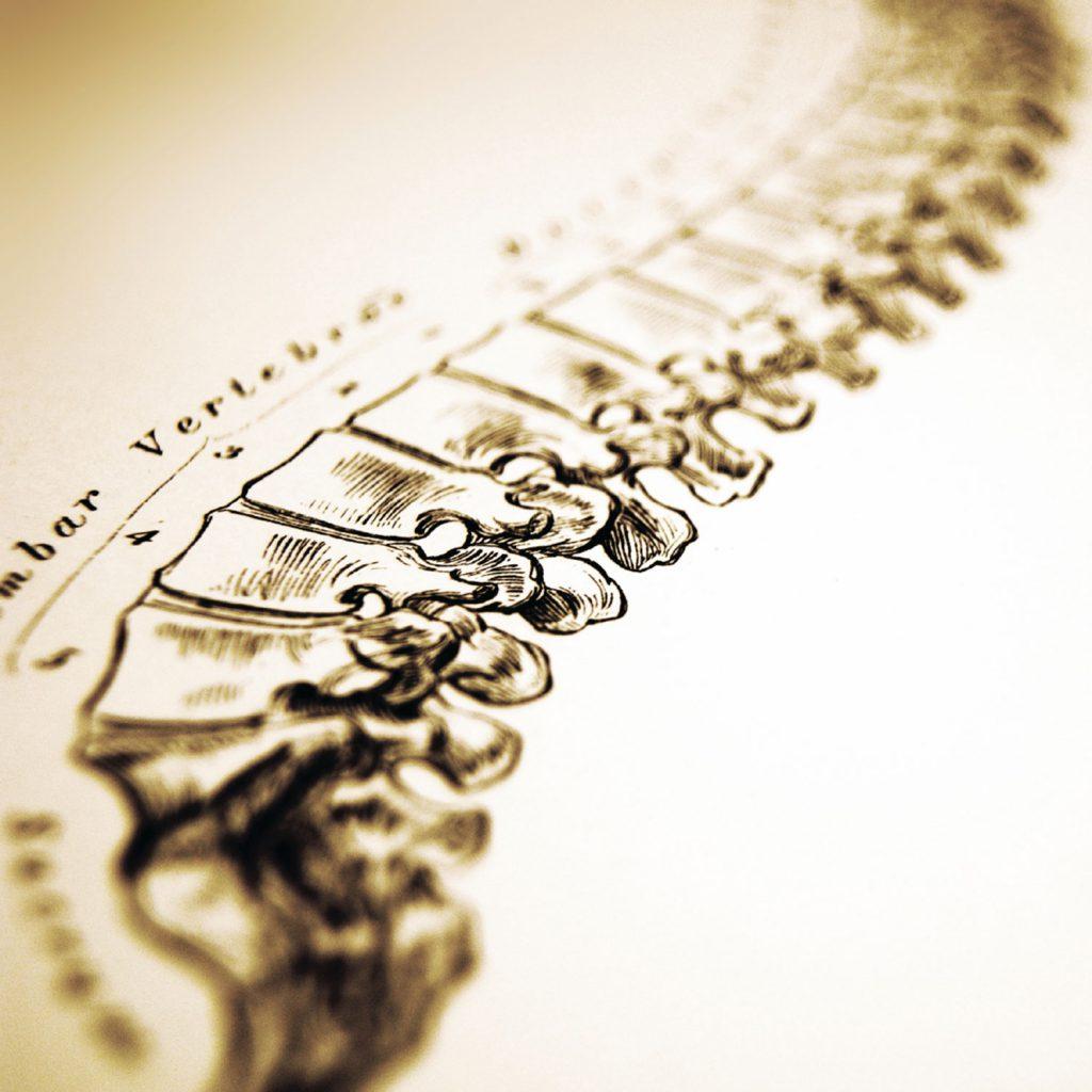 Chiropractic-gesund